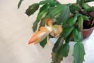 blooming-shakoba.jpg