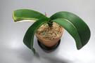 new-leaf.jpg