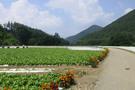 veg-field.jpg